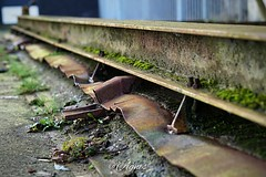 Rusted Rail... #2019#assen#havenkade#industrial#area#rail#rusty#moss#old#fabric#historic#macrophotography#moodygrams#photography#photooftheday#love#explore#world#city#cityphotography#street#streetphotography#outdoor#abandoned#restore#instamoment#instadail (agnes.postma.hoogeveen) Tags: photooftheday love loveit moodygrams havenkade city streetphotography world macrophotography street cityphotography abandoned area historic explore restore assen old rail rusty instadaily outdoor 2019 moss industrial instamoment fabric photography