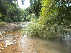 river and bamboo on the center