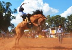 Hugo Hartwig (Eduardo Amorim) Tags: gaúcho gaúchos gaucho gauchos cavalos caballos horses chevaux cavalli pferde caballo horse cheval cavallo pferd pampa campanha fronteira quaraí riograndedosul brésil brasil sudamérica südamerika suramérica américadosul southamerica amériquedusud americameridionale américadelsur americadelsud cavalo 馬 حصان 马 лошадь ঘোড়া 말 סוס ม้า häst hest hevonen άλογο brazil eduardoamorim gineteada jineteada