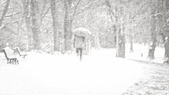 storm (frax[be]) Tags: snow streetphotography park atmosphere 90mm fuji umbrella outdoor noiretblanc monochrome poetry winter blackandwhite bnw bw