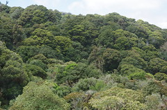 Our last view of a tropical forest in Costa Rica (Badly Drawn Dad) Tags: geo:lat=972330329 geo:lon=8394961029 geotagged costarica cri empalme jardín provinciadesanjosé takenfromamovingvehicle greentextures