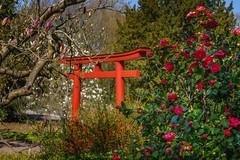 Japan Garten (KaAuenwasser) Tags: japangarten stadtgarten karlsruhe garten anlage park pflanzen baum bäume gehölz kamelien magnolie blüten blüte tor rot frühling märz 2019