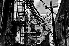 Environment (draketoulouse) Tags: chicago street streetphotography bw blackandwhite monochrome cable window apartment city sunlight shadow