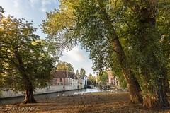 Bruges (joeri-c) Tags: tree park autumn bruges leaves water tourism bridge begijnhof beguinage tenwijngaerde brugge belgie belgique belgien belgium unesco