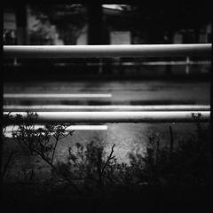 ガードパイプ (frenchvalve) Tags: ガードパイプ 雨 雨滴 二眼レフ film filmphotography analog 120 120rollfilm 6x6 mediumformat topcon primoflex tlr triplet fixedlens monochrome bnw raindrops rain