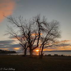 Evening by the fjord (Trond Sollihaug) Tags: tree skatval stjørdal trondheimsfjord trøndelag trondelag sunset seaside sky sea nisi nisifilter